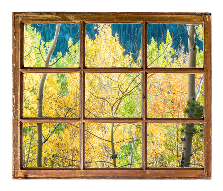 aspen tree: Colorado aspen tree in fall colors as seen from a sash window of old cabin