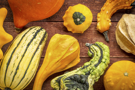 gourd and winter squash collection against rustic red painted barn wood Stock Photo