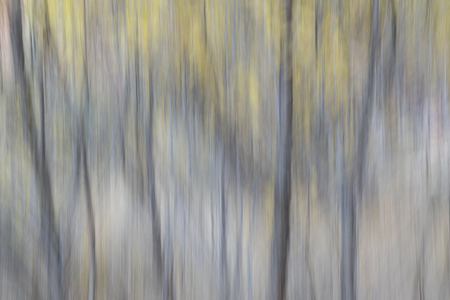motion blur: Trees in fall colors - nature motion blur abstract Stock Photo