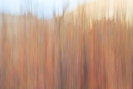 Fall colors in Colorado  - nature motion blur abstract created with a camera intentional movement