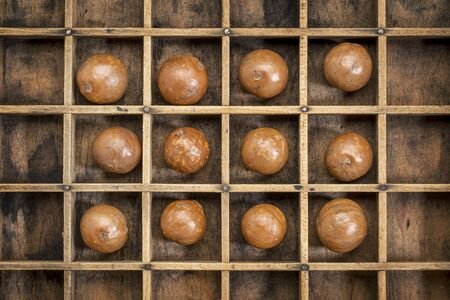 typesetter: macadamia nuts in shells in rustic wooden typesetter box
