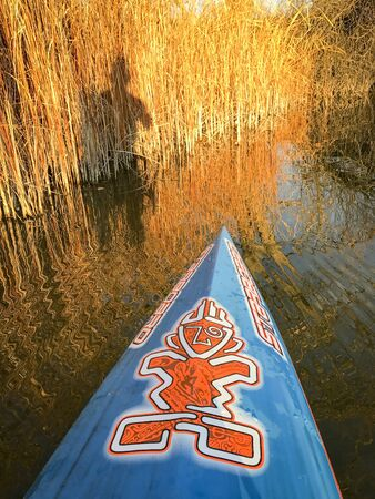 FORT COLLINS  CO, USA - NOVEMBER 13, 2016: Autumn lake paddling - a bow of stand up paddleboard by Starboard with a paddler shadow on reeds.