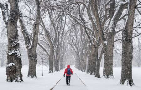 colorado state: lonely male figure walking in a blizzard - alley of old elm trees - historical Oval at Colorado State University campus, Fort Collins