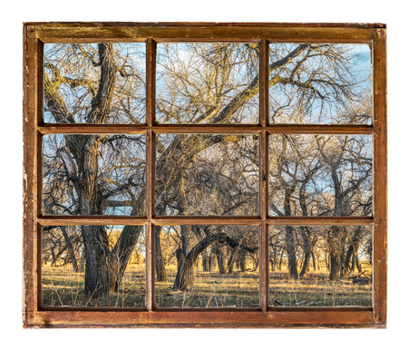 riparian forest on the shore of South Platte River as seen  through vintage, grunge, sash window with dirty glass