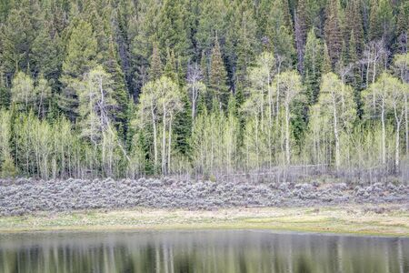 aspen leaf: aspen, grover sagebrush, and spruce with water reflection, early spring scenery in Rocky Mountains, Colorado at Willow Creek Pass Stock Photo