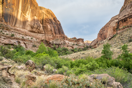 Grandstaff Canyon (formerly known as Negro Bill Canyon) in the Moab area, Utah, spring scenery