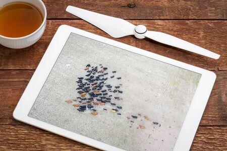 ganado en un campo seco en el oeste de Nebraska, revisando la imagen aérea en una tableta digital Foto de archivo