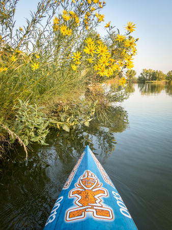 Fort Collins, CO, USA - August 28, 2017: Late summer paddling on a lake in northern Colorado - a bow of racing stand up paddleboard by Starboard with the tiki logo and yellow sunflowers. Editorial