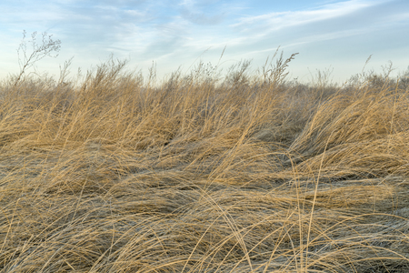 background of dry tall grass and weeds