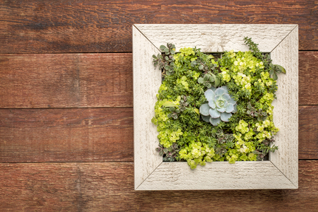 succulent plant mini garden in a picture frame (wall planter) against rustic barn wood Stock Photo
