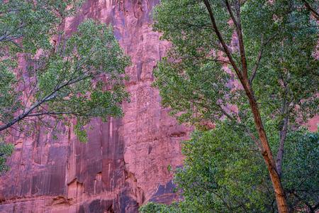 green gottonwood trees against sandtone canyon wall