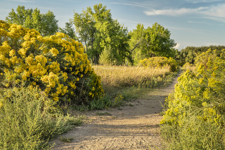 Recreational trail in northern Colorado - late summer scenery with rabbit brush in bloom Stock Photo