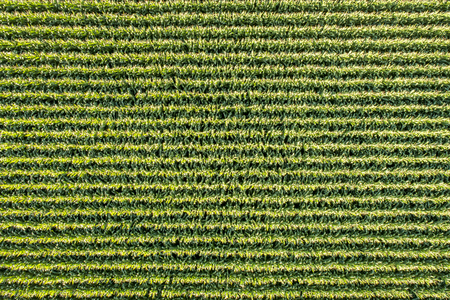 Aerial view of corn field in eastern Colorado Stock Photo
