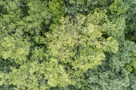 Summer aerial view of green forest in Missouri