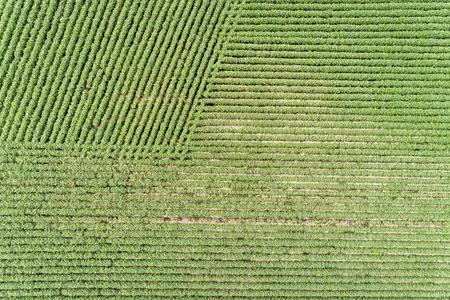 Green soybean fields in Nebraska - aerial view