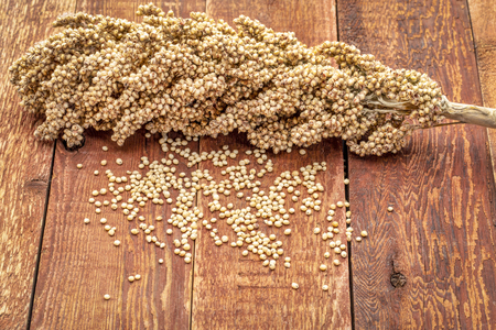 Clusters of ripe white sorghum seeds on rustic red wood background