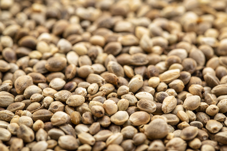 background of organic dried hemp seeds with a selective focus