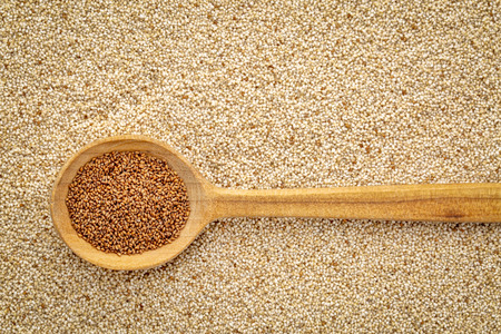 gluten free brown teff grain on a wooden spoon against background of ivory teff - important food grain in Ethiopia and Eritrea
