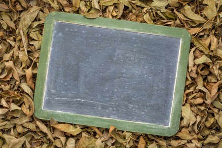 blank, vintage slate blackboard with white chalk smudges against dry leaves background Stock Photo