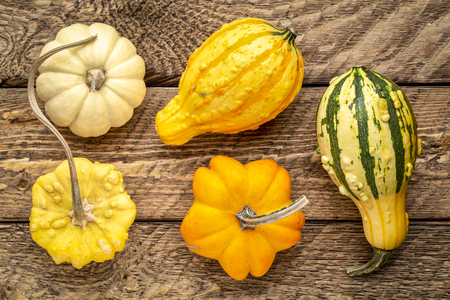 ornamental gourds against rustic wood - fall holidays decoration Stock Photo