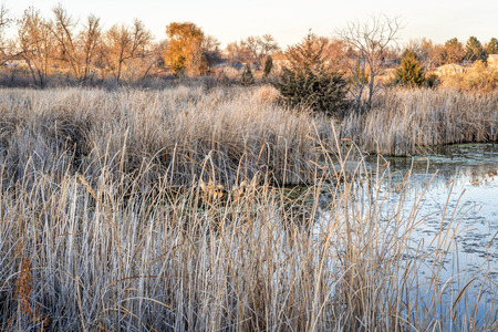 fall scenery in one of natural areas in Fort Collins, Colorado along the Poudre River converted from gravel quarry Stock Photo