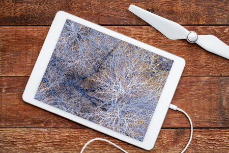 leafless cottonwood trees in winter, reviewing an aerial image on a digital tbalet Фото со стока