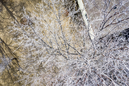 aerial overhead view of trees covwered by frost in a backyard