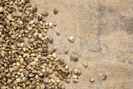 dried hemp seeds on textured handmade bark paper with a copy space