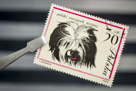 Polish Lowland Sheepdog on a vintage, canceled post stamp from Poland (early 1960s) held by tweezer above  empty stockbook page