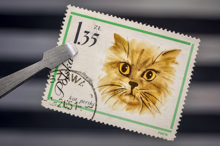 persian cat  on a vintage, canceled post stamp from Poland (early 1960s) held by tweezer above  empty stockbook page
