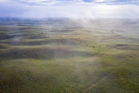 foggy spring morning over Nebraska Sandhills, aerial view with cattle grazing