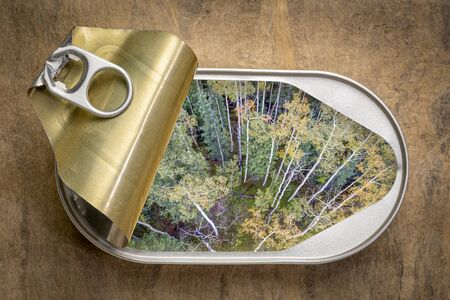 Fresh fall landscape of mixes forest in fall colors in an open tin can, top view against textures bark paper