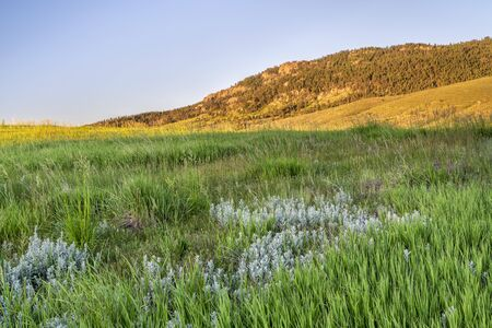 early summer scenery of Rocky Mountains foothills, Lory State Park in northern Colorado Foto de archivo