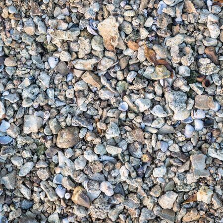 natural background and texture of a river shore: gravel, rocks, leaves and shells Foto de archivo