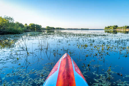 stand up paddleboard on a calm overgrown lake, paddler POV, summer scenery in Boyd Lake State Park in northern COlorado