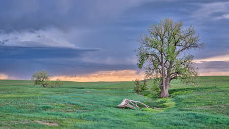 heavy storm cloud over green prairie with lonely trees - Pawnee National Grassland in Colorado, late spring or early summer scenery