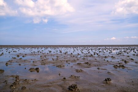 spaghetti-like worm piles in the Wadden Sea are reflected in the water