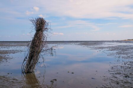 A shrub bordering the path is reflected in the waters of the Priel during the low tide