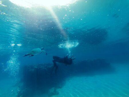 A diver drifts as a sea turtle approaches 版權商用圖片