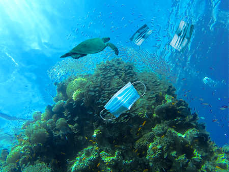 A turtle swims between face masks on a reef