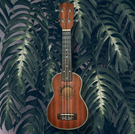 Acoustic music instrument, ukulele on tropical leaves background. Stock Photo