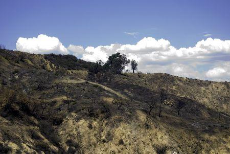 griffith: Griffith Park California burn area