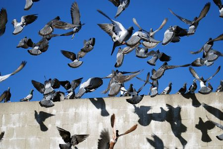 chaotic: Chaotic Pigeons