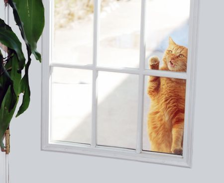 Cat knocking on window of white door to get inside the house.