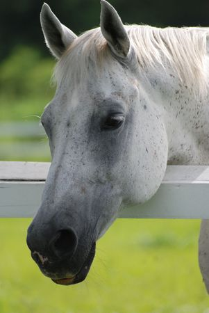 Horse leaning head on stable rail.