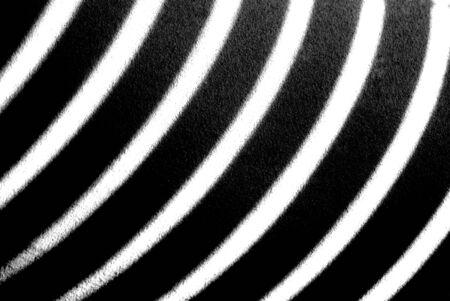 Black and White stripes of a zebra providing stark contrast.