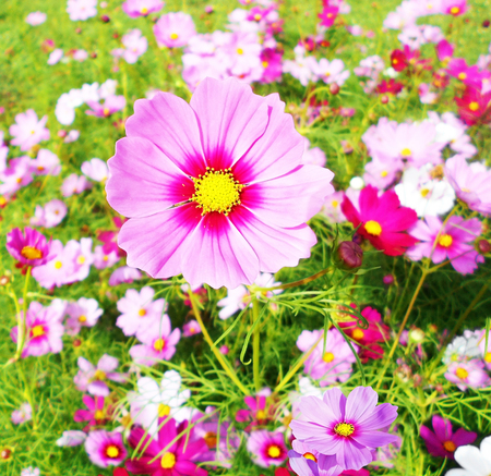 natures: Abundant Field of Wild Flowers growing vivaciously creating a work of art on Mother Natures canvass.