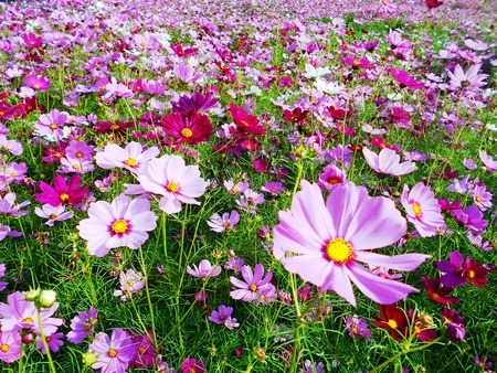 Field of vivid wild flower dreams created by Mother Nature