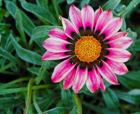High Contrast Flower