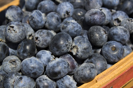feast: Blueberry Feast Stock Photo